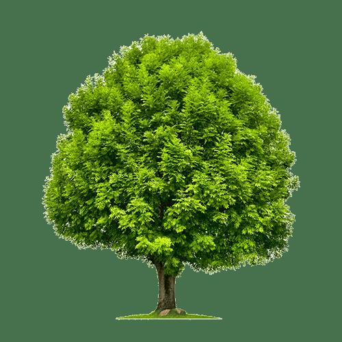 Esche Baum