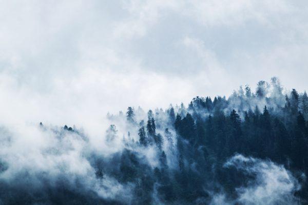 MBzwo Pflegetipps für Massivholz im Winter, Pflegetipps Massivholz Winter, MBzwo Massivholztische nach Maß